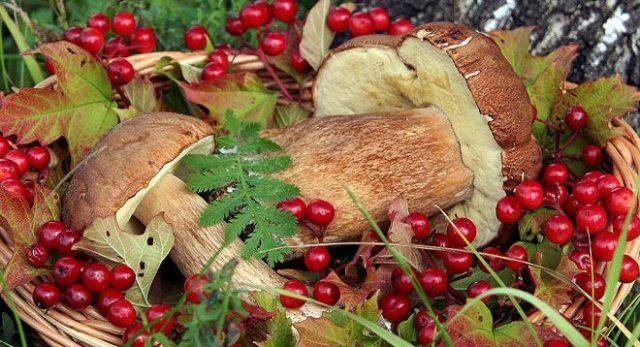 Россиян пугают возможным налогом на грибы и ягоды | Онлайн ...